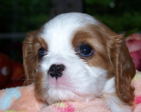Penelope 5 Wochen