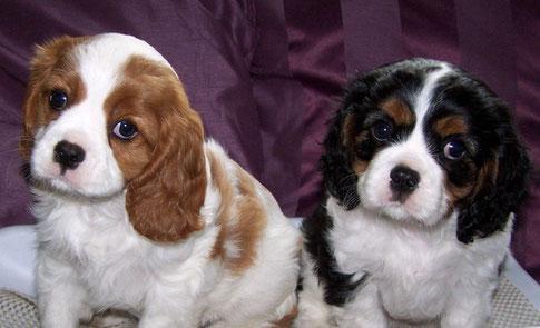 Jasper und Jo-Karlchen 9 Wochen