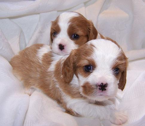 Pia und Penelope 4 Wochen
