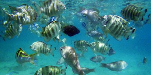 グアムの魚たち (my Dropbox)