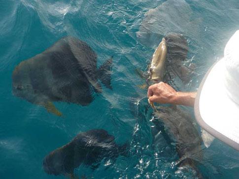 les poissons sont ses amis