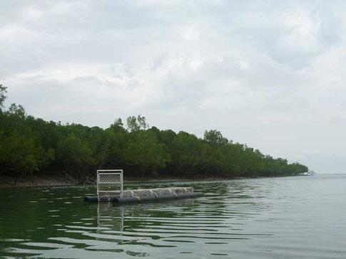 piege à crocos à l'embouchure de la rivière