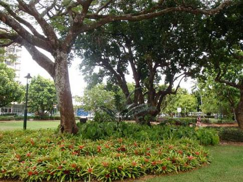 végétation tropicale dans les nombreux espaces verts