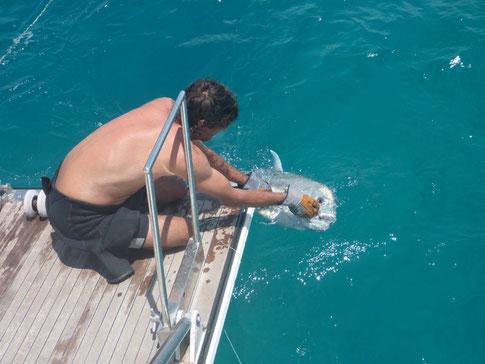Jaco libére la carangue