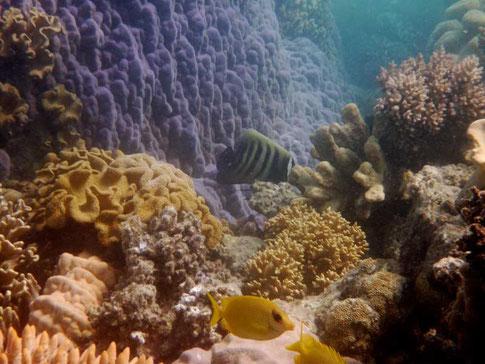 du corail en pleine forme