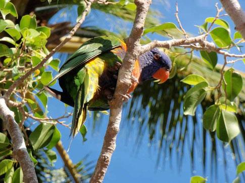 les oiseaux sont trop beaux
