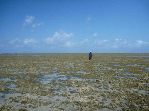 le platier à marée basse