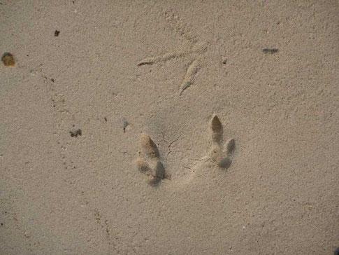traces : mini kangourous et oiseau