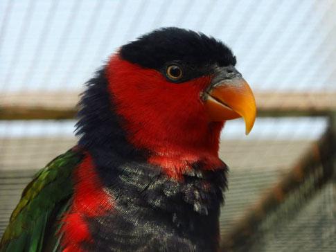 Partnervermittlung Papageien - Der Vogelpark Neureut ist endlich wieder geöffnet! | Forca Sports