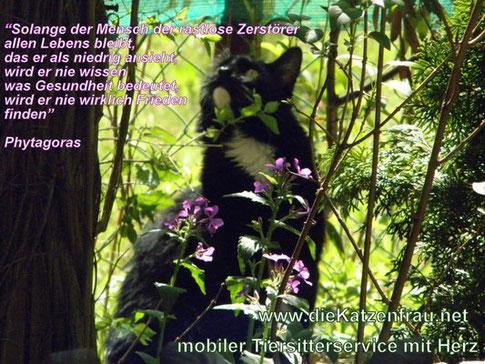 Catsitting Saarland - Mobile Katzenbetreuung - die Katzenfrau