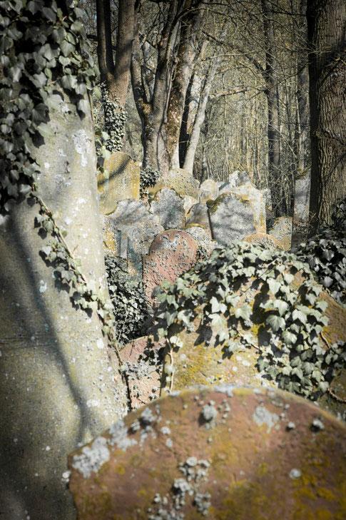 Jahrhunderte der Nachbarschaft, Grabsteine und Bäume