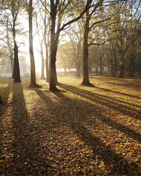 12月1日(2013) 落ち葉の公園(野川公園)