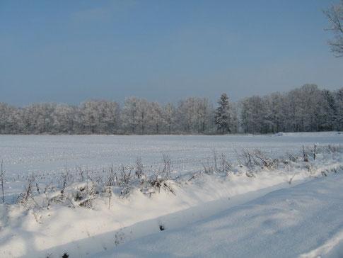 Verschneite Felder am Bruchwiesenweg