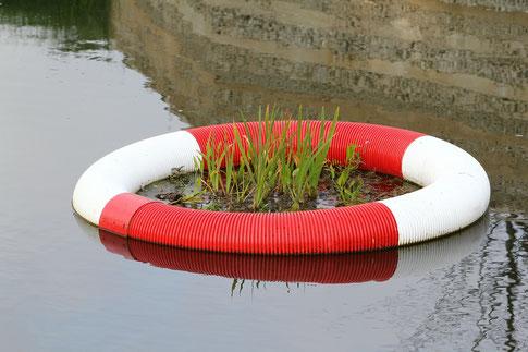 Schwimmring im Wasser in dem eine Pflanze wächst