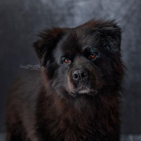 Hundeaktion Fototermin Erdweg