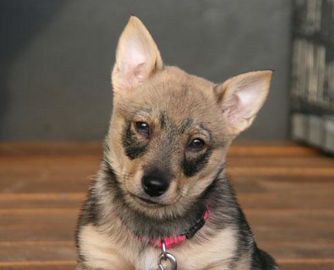 Flair, bijna 11 weken oud