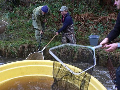 Récupération du poisson dans la pêcherie de l'étang de Miel