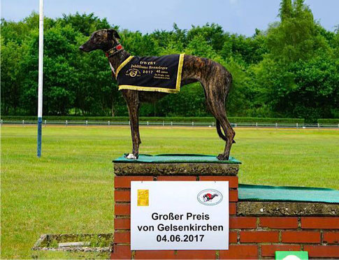 Felizitas del Ninos Vencedores (Steppuhn) Rennen - Hündinnen - 1. Platz