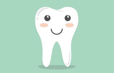 Woraus besteht ein Zahn