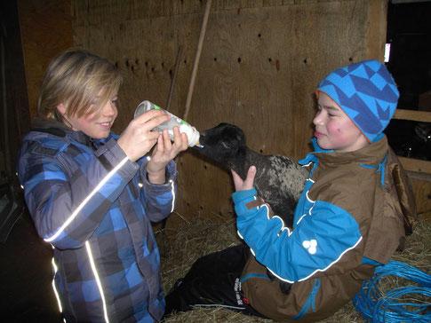 Helfen beim Tiere füttern.