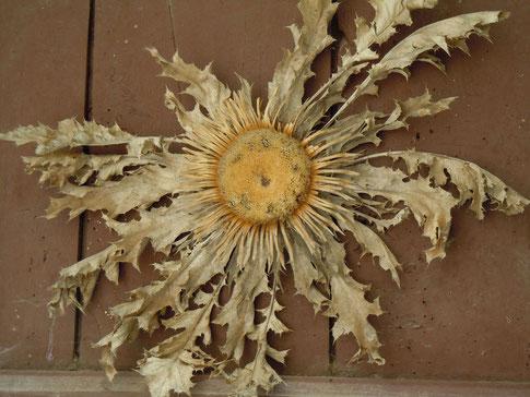 fleurs des causses et du sud-aveyron