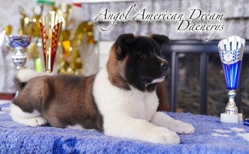 щенок американской акиты