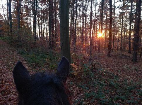 Im Gelände Richtung Sonnenuntergang