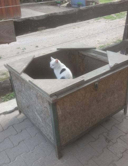 Kätzchen in der Kiste ;-)