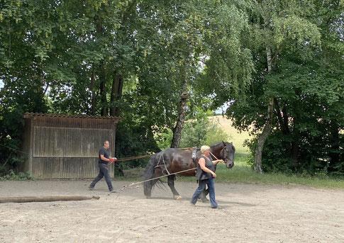 Willi - das erste Mal mit Baumstamm!