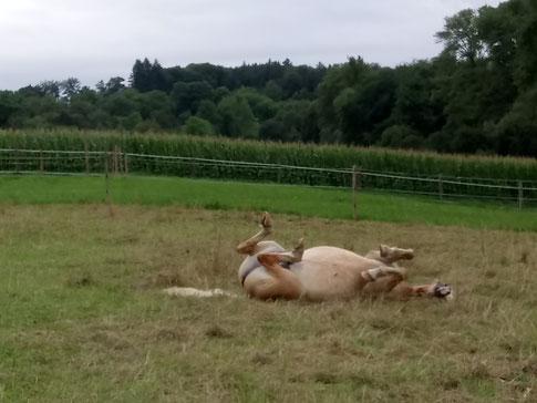 Vor unserem Spaziergang: Pferdewellness auf der Weide