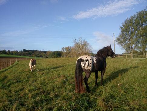 Die Pferde auf Weide Nr. 4