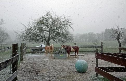 Und nochmal: Schnee