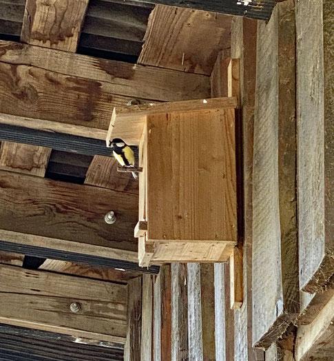 Endlich mal wieder eine Meisenfamilie im Vogelhäuschen über der Box
