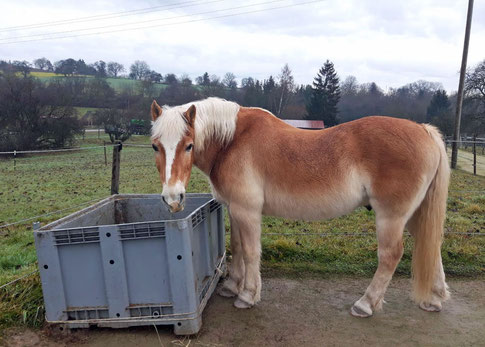 Mein Plüsch-Pony ❤️