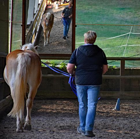 Position beim Fahren vom Boden aus: der Abstand zum Pferd ist größer als bei der Arbeit am langen Zügel