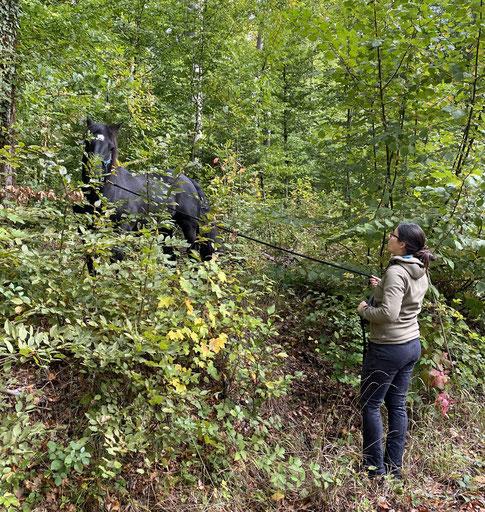Willi im Unterholz