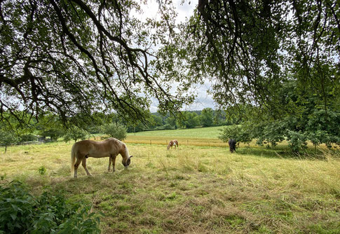 Pferdechilling