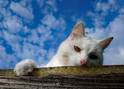 Paula auf dem Dach unserer Pergola