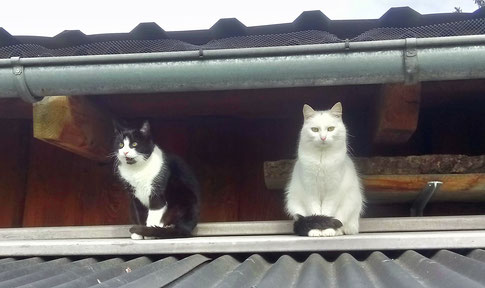 Fine und Paula hinterm Stall auf dem Dach