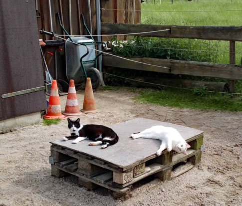 Cat-Chilling :-)