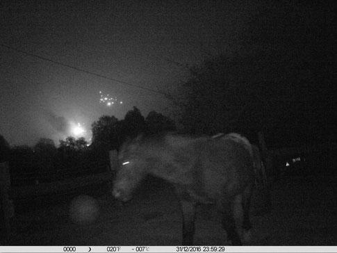 Feuerwerk am 31.12.2016 um 23.59 Uhr