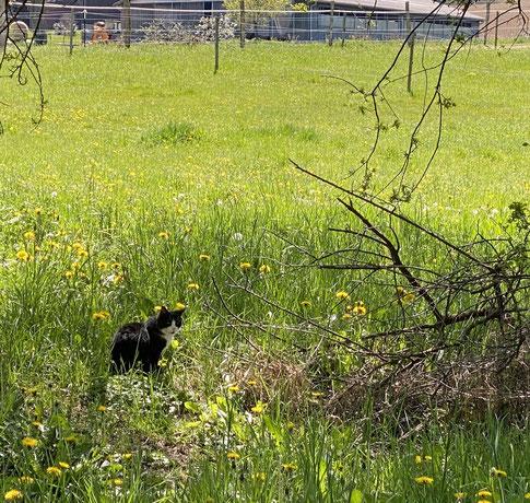 Finchen auf der Weide