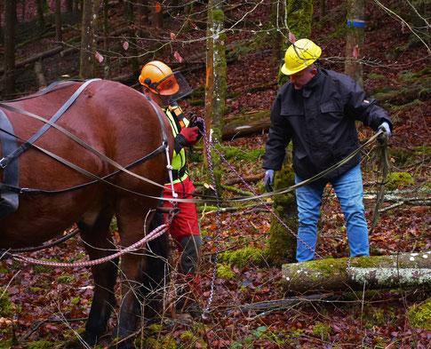 Gerret beim Holzrücken