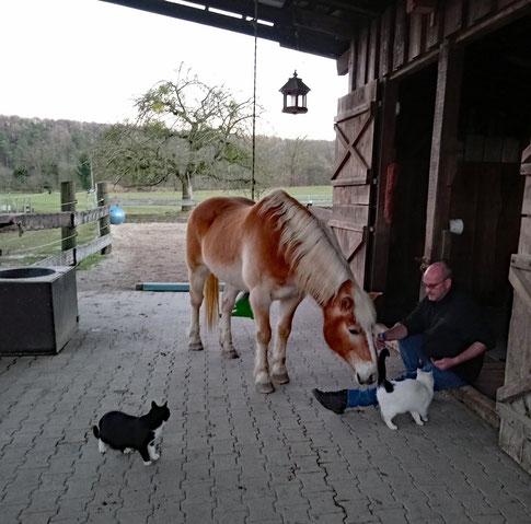 Mit Pferd und Katz