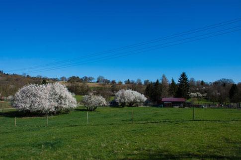 Und plötzlich war es Frühling! :-)
