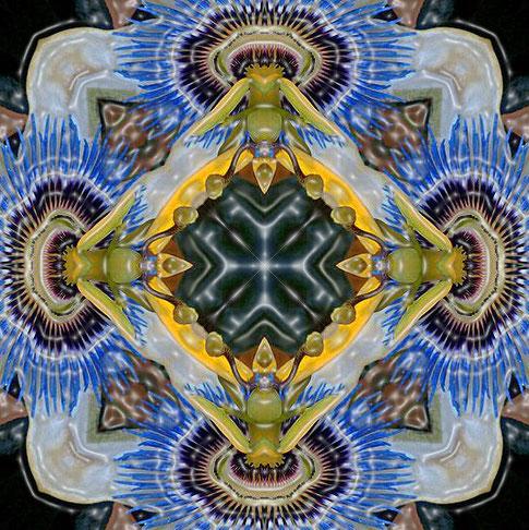 Passion blue 6