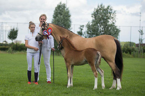 Oostdijk's Dancing Delyth, with her 2016 coltfoal Buitenklaver's Dancing Pixels (Fairywood Tomboy) with his owners Claire and Tessa