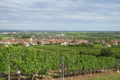 Пфальцские виноградники