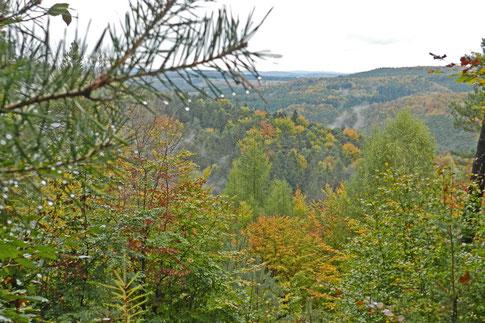Пфальцский лес