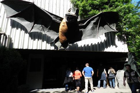 Франкфуртский зоопарк - дом ночных зверей